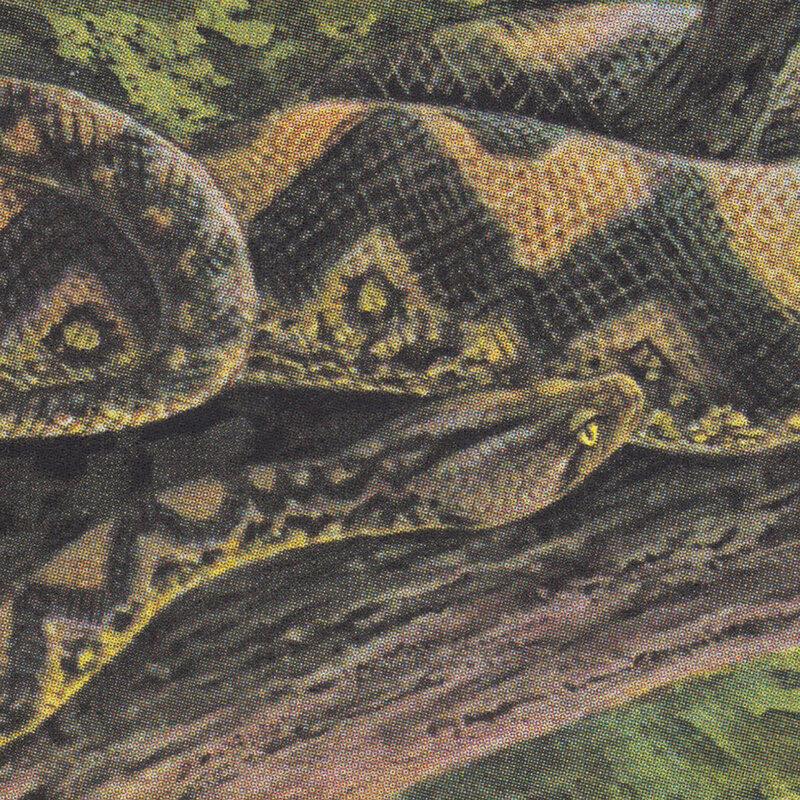 Cover art - Rainforest Spiritual Enslavement: Ambient Black Magic