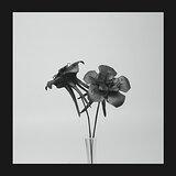 Cover art - Jlin: Dark Lotus