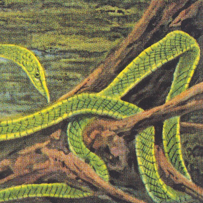 Cover art - Rainforest Spiritual Enslavement: Green Graves