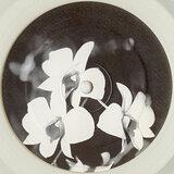 Cover art - Ovatow: Phalaenopsis