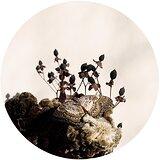 Cover art - Ben Buitendijk: Transcended Being