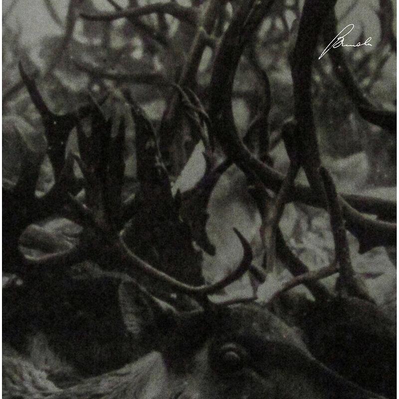 Cover art - Company: Prosody